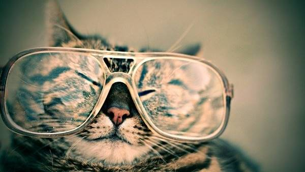 A cat with its glasses.